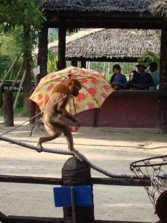 Show-monkey-umbrella-PhuketThailand